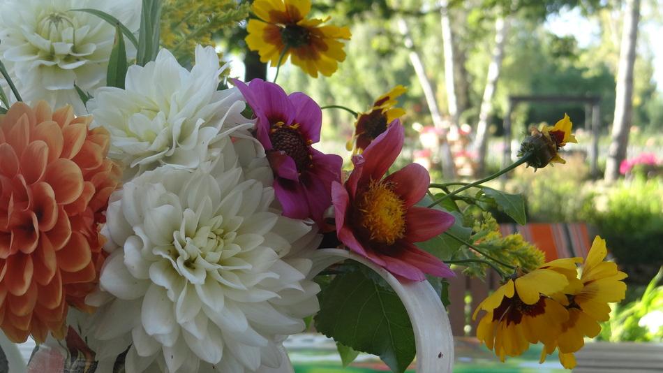 Coucou du Vendredi et son Bouquet