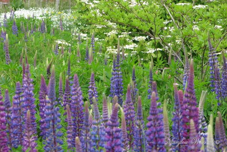 Nouvelles du Canada 180 :  Encore un peu du jardin
