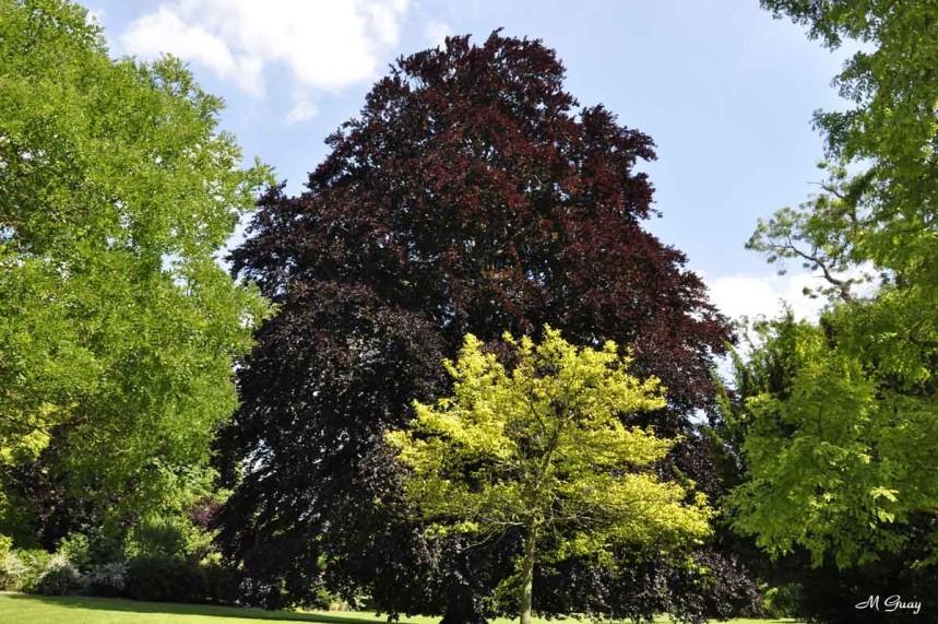 arbres-1514.jpg