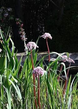 Visite aux jardins Amoena