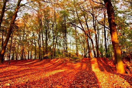 Parc de Roodebeek : Bonjour tristesse