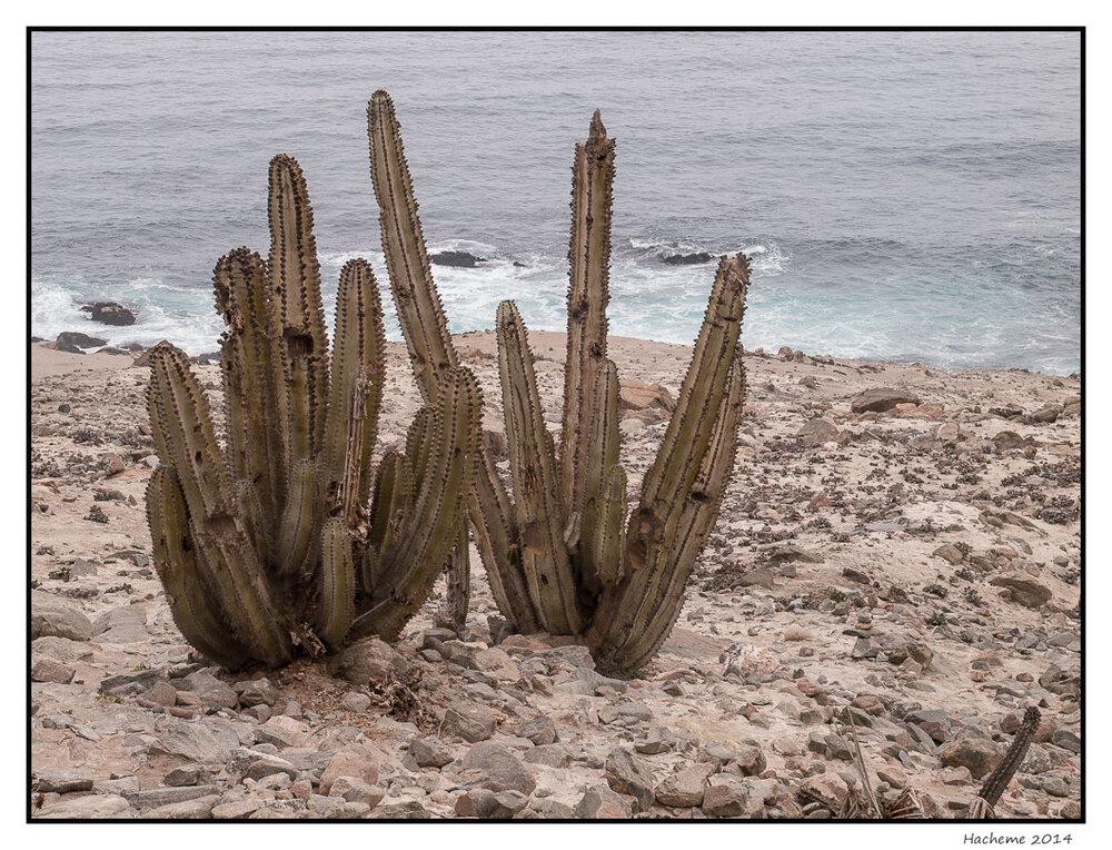 Côte Pacifique