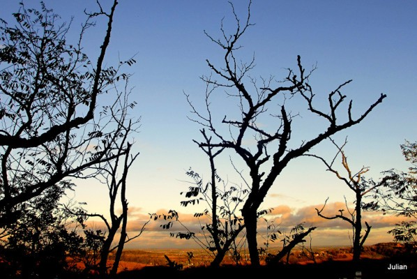 q03---Branches-du-soir.JPG