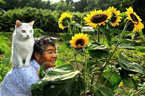 Belle amitié entre une mamie japonaise et son chat