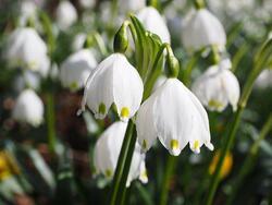 III - Sud - Armure d'Orichalque de la Fleur (Lilium/Flower Cloth - Orichalcum Cloth)