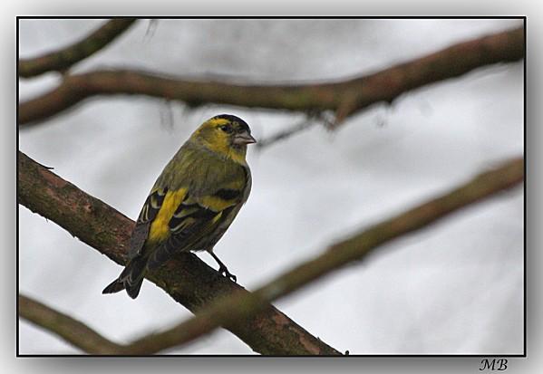 Oiseaux-de-mon-jardin-7430.jpg