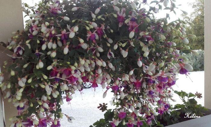 Quelques fleurs  ........