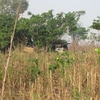 Togo Bivouac dans la brousse