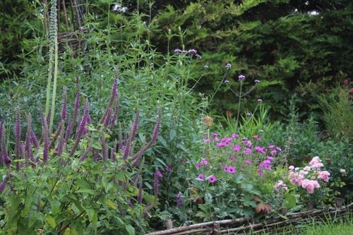 Petit aperçu du jardin
