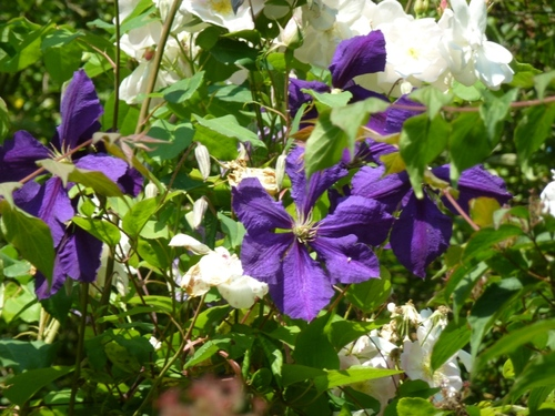 Juin dans mon jardin