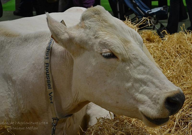 Salon de l'Agriculture 2014 : La Bleue du Nord