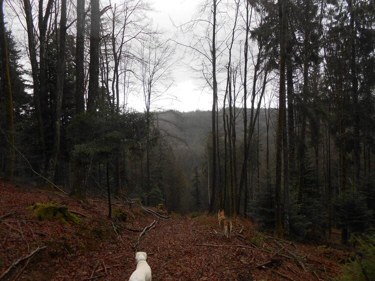 Vosges-true Fossard