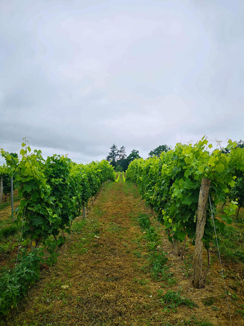 6ème jour Bretagne d'Armagnac (32) > Nogaro (32) = 28 km