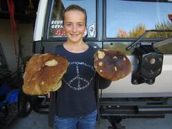 Les champignons du Cantal2