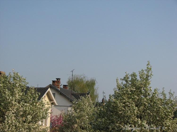 Ciel d'Alsace 311