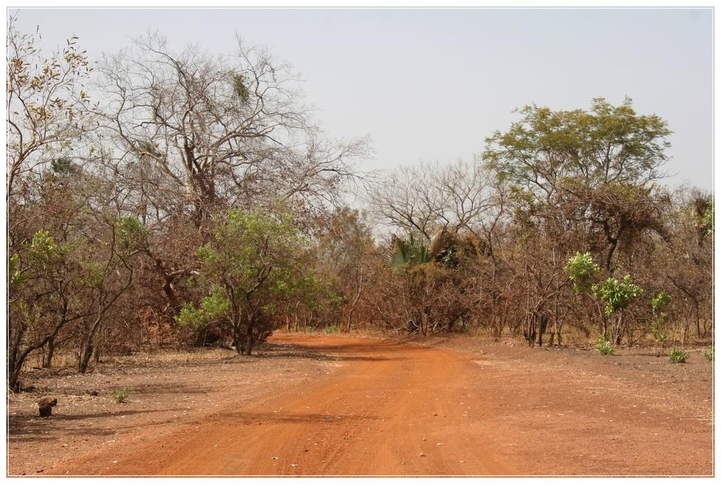 PARC DE NIOKOLO KOBA SENEGAL