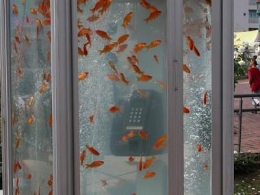 Fish-Tank-Phone8-640x4803.jpg