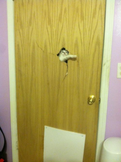 les chats sont effrayants