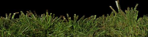 Tubes herbe