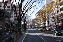 rue Zelkova Chuo-ku 市中央区