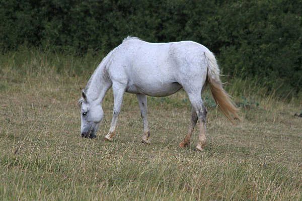 chevaux -4-
