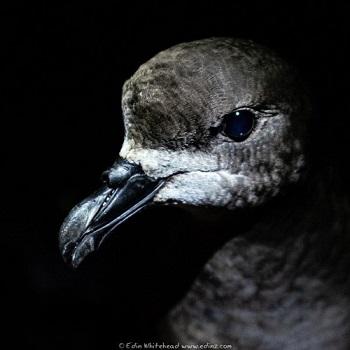 Un oiseau résilient ...