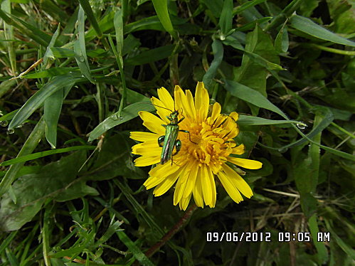 fleurs-9-Juin-002.JPG