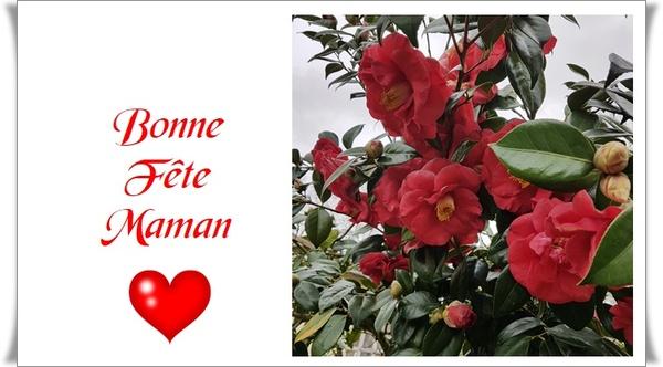 Roses et fleurs Samedi