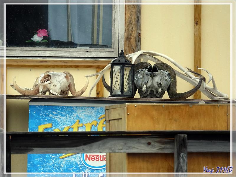 Les trophées de chasses fructueuses s'affichent devant de nombreuses maisons - Sisimiut - Groenland