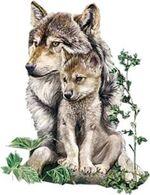nous protégeons l'amie des loups