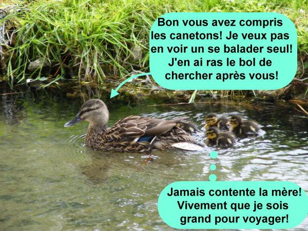 C'est la vraie vie des canards.