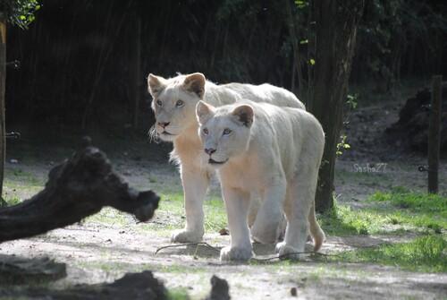 Malawo à gauche & Thabana à droite.