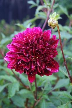 Les 4 fleurs de Biscarrosse