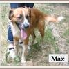 Max X 2
