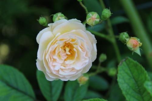 Ghislaine est en fleurs