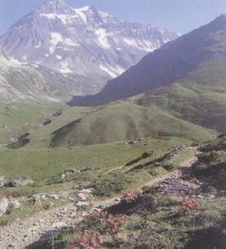 Un jardin alpin grandeur nature