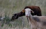 Mouton - p164