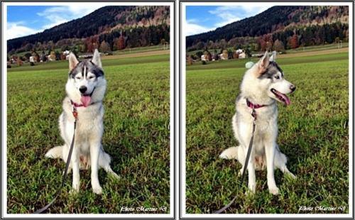 Haïka (1,5 an)