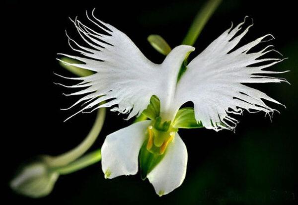 Fleurs étranges