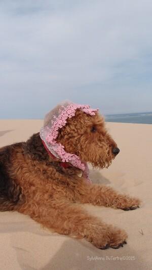 Arcachon : La Dune du Pilat