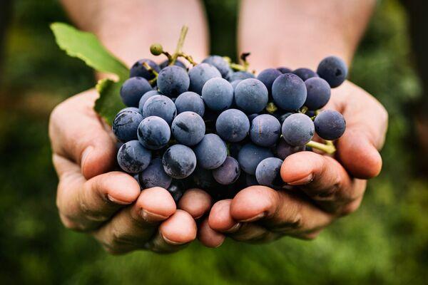 Le resvératrol est un polyphénol naturellement présent dans les raisins rouges, et donc dans le vin rouge. © mythja, Shutterstock