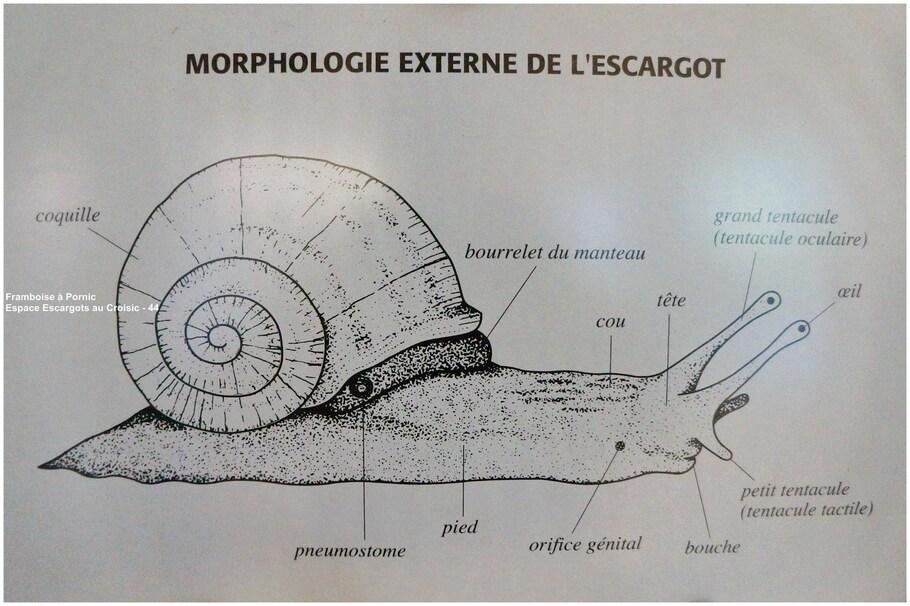 Espace ESCARGOTS au Croisic - 44