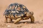 Projet: tortues de terre