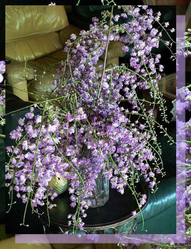 http://p8.storage.canalblog.com/88/04/371591/26547934.jpg