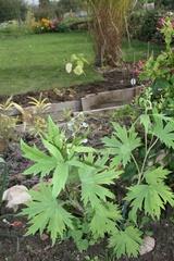 Nouvel arrivage de plantes