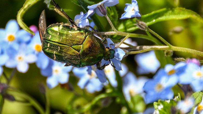 Vert [défi du lundi] coléoptère