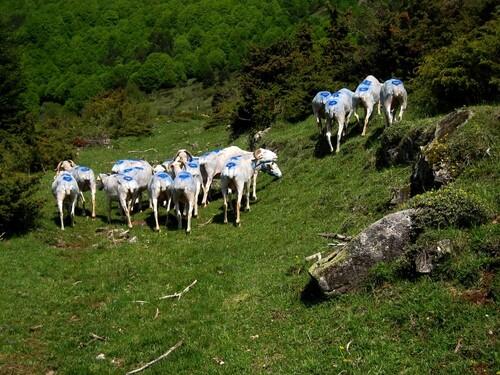 Retour en Ariège