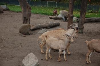 dierenpark amersfoort d50 2011 048