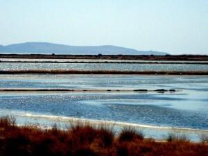 2014-09-04-13.25.04 ROLAND visite de Lesbos