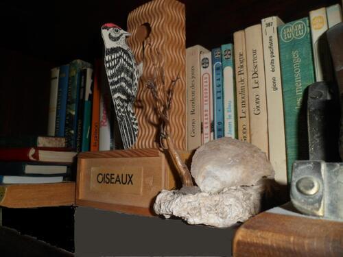 Bivalve,mollusque lamellibranche pouvant dater du Toarcien180millions/années